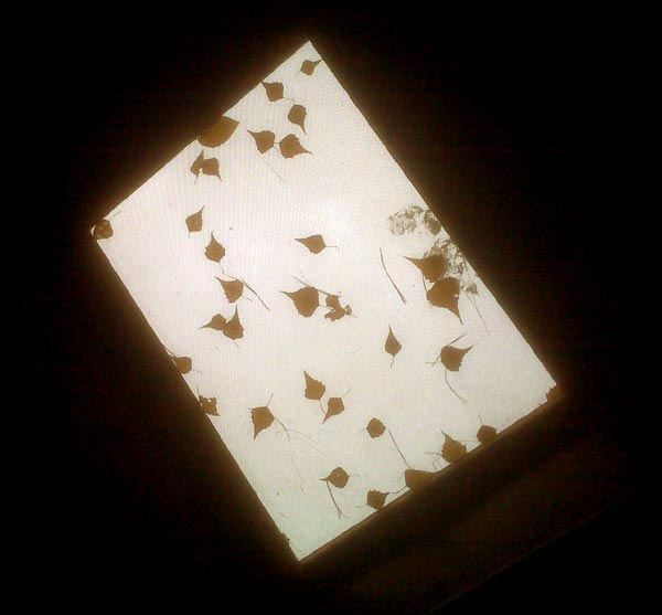 photograph of leaves on the skylight