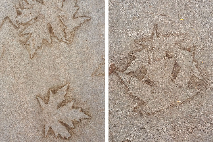 imprint from wet leaf on a slate sidewalk in Glen Ridge NJ