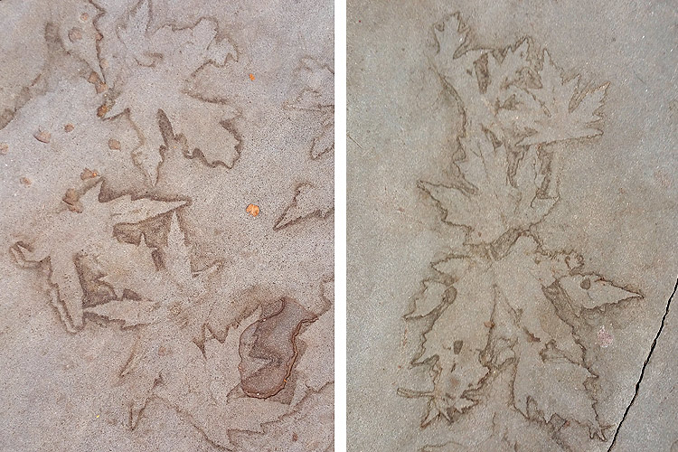 abstract images from leaf imprints on slate sidewalks