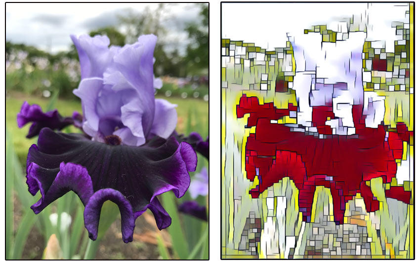 Using the Prisma app Mondrian filter on a iris flower picture