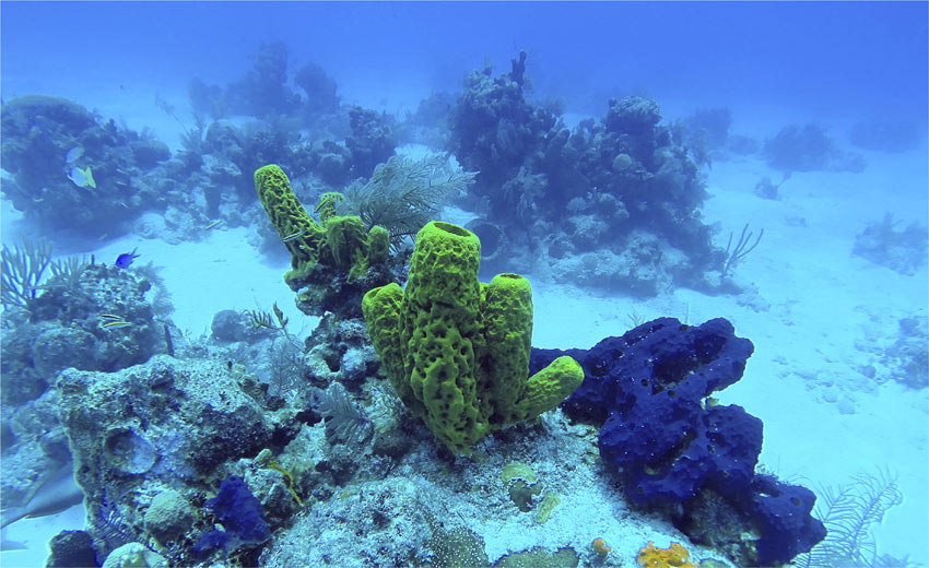 underwater view of coral in Turks & Caicos