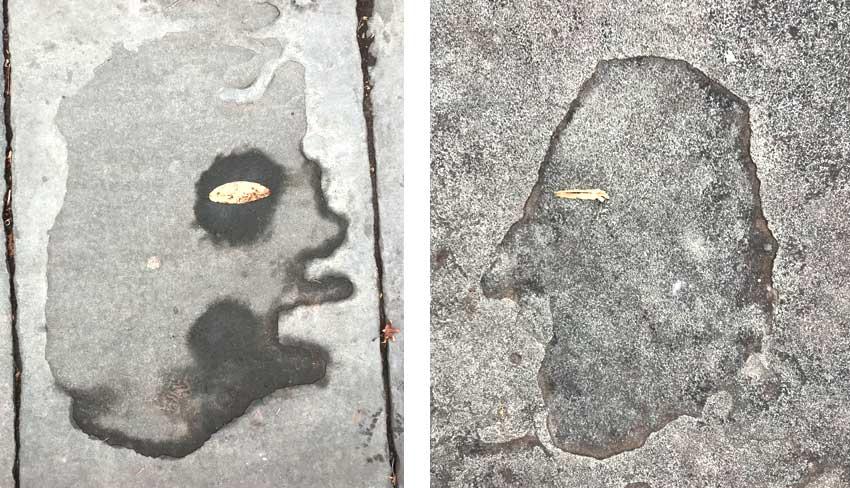 two heads seen on the slate sidewalks of Glen Ridge, NJ