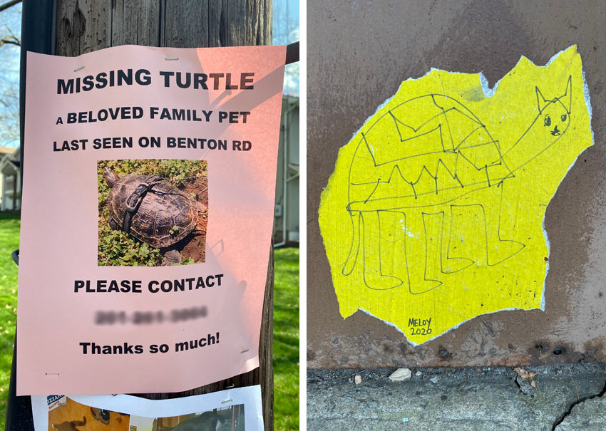 runaway turtle in NJ and turtle street art in NYC